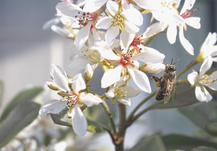 What's All The BUZZ About LocalHoney?